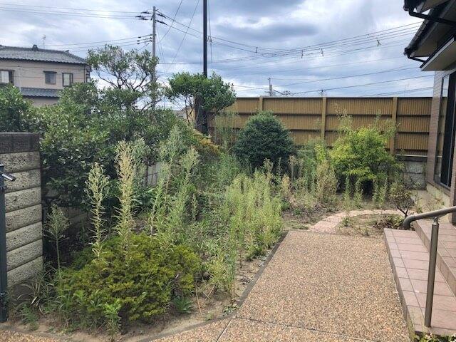 雑草が生えている庭